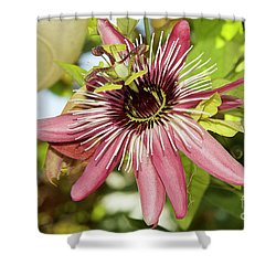 Pink Passiflora Shower Curtain by Elvira Ladocki