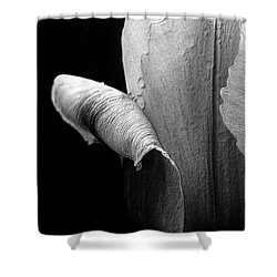 Pink Pearl Petals In Black And White Shower Curtain