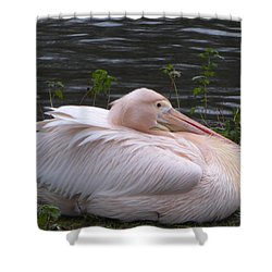 Pink Pelican Shower Curtain