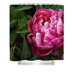 Shower Curtain featuring the photograph Pink Peony by Jean Noren