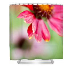 Shower Curtain featuring the photograph Pink Petal by Erin Kohlenberg