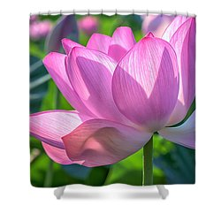 Shower Curtain featuring the photograph Pink Petals by Cindy Lark Hartman
