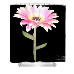 Pink Pink Delight Shower Curtain