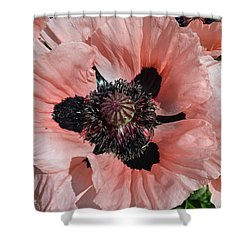 Pink Poppy Shower Curtain