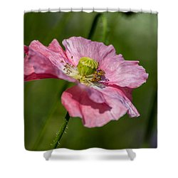 Pink Poppy Shower Curtain by Martina Fagan