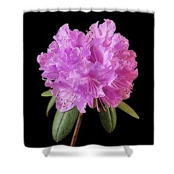 Pink Rhododendron  Shower Curtain by Jim Hughes