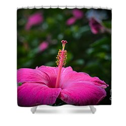 Pink Romance Shower Curtain by Kelly Wade