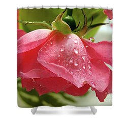 Pink Rose #3 Shower Curtain