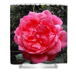 Pink Rose Shower Curtain by Adam Cornelison