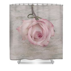 Pink Rose Beauty  Shower Curtain by Sandra Foster