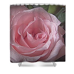 Pink Rose Bliss Shower Curtain