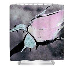 Pink Rose Bud Shower Curtain by Karen Lewis