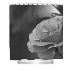 Pink Rose - Bw Shower Curtain