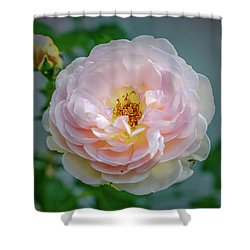Pink Rose #c3 Shower Curtain by Leif Sohlman