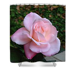Shower Curtain featuring the photograph Pink Rose by Carla Parris