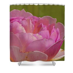 Pink Rose #d3 Shower Curtain
