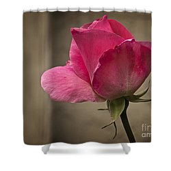 Shower Curtain featuring the photograph Pink Rose by Inge Riis McDonald
