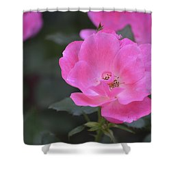 Pink Rose Shower Curtain by Linda Geiger