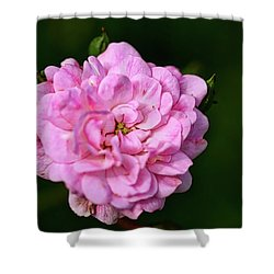 Pink Rose Petals Shower Curtain