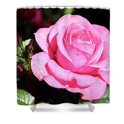 Pink Rose Shower Curtain by Ronda Ryan