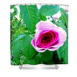 Shower Curtain featuring the photograph Pink Rose by Sadie Reneau