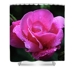 Pink Rose With Raindrops Shower Curtain