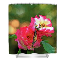 Pink Roses And Butterfly Photo Shower Curtain