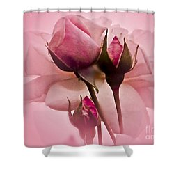 Roses In Pink Mist Shower Curtain by Carol F Austin