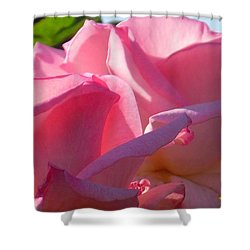 Pink Roses Shower Curtain by Karen Molenaar Terrell