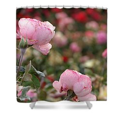 Pink Roses Shower Curtain by Laurel Powell
