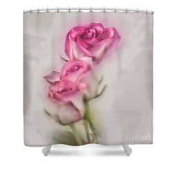 Pink Roses Shower Curtain by Shirley Mangini
