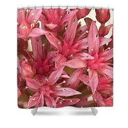 Pink Sedum Flower Macro Shower Curtain by Sandra Foster