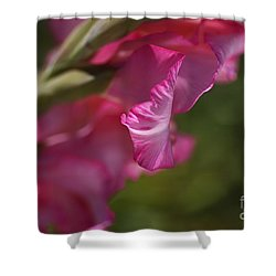 Pink Side Of Gladioli Shower Curtain