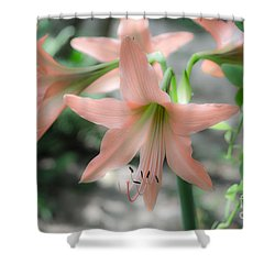 Pink Softness Shower Curtain