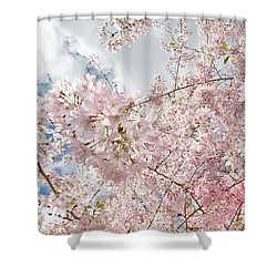 Pink Spring Shower Curtain by Daniel Furon