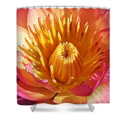 Pink Suprise Shower Curtain