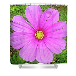 Shower Curtain featuring the photograph Pink by Terri Harper