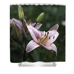 Pink Tiger Lily Shower Curtain