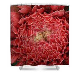 Pink Torch Ginger 1 Shower Curtain