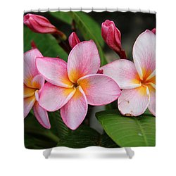 Pink Trio Shower Curtain
