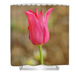 Shower Curtain featuring the photograph Pink Tulip by Dariusz Gudowicz