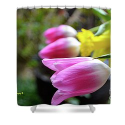 Pink Tulips Row Shower Curtain
