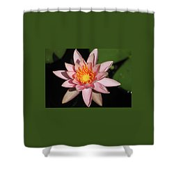 Shower Curtain featuring the photograph Pink Water Lily 2016 by Suzanne Gaff