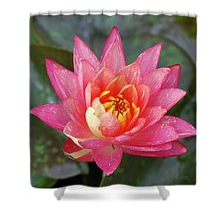 Pink Water Lily Beauty Shower Curtain