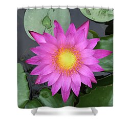 Pink Water Lily Flower Shower Curtain