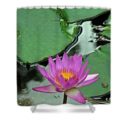 Shower Curtain featuring the photograph Pink Water Lily by Judy Vincent