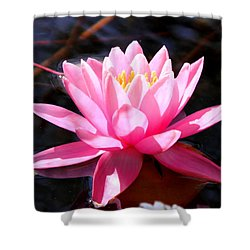 Pink Water Lily Shower Curtain by M Diane Bonaparte