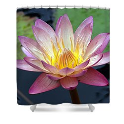 Pink Water Lily Shower Curtain by Teresa Zieba