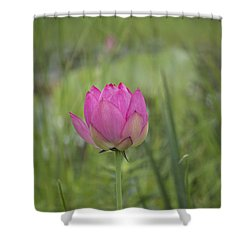 Pink Waterlily Bud Shower Curtain by Linda Geiger