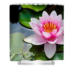 Pink Waterlily Shower Curtain by Daniel Precht